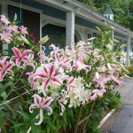 White Trellis Motel - Family Friendly